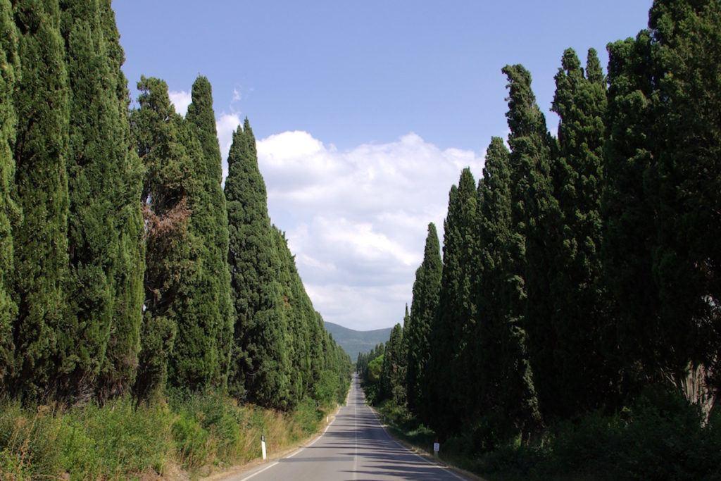 La Costa degli Etruschi Toscana - Le Corti di Montepitti